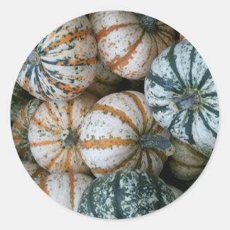 Multicolor Autumn Harvest Pumpkins Sticker