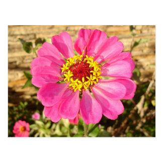 Multicolor Bloom Postcard