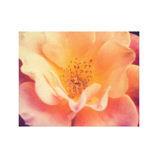 Multicolor rose in a garden canvas print
