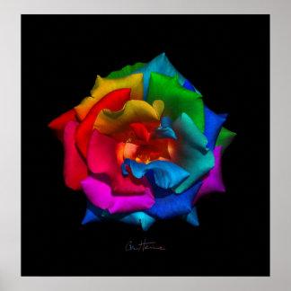 Multicolor Rose Print