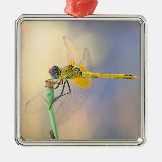 Multicolored dragonfly Silver-Colored square decoration