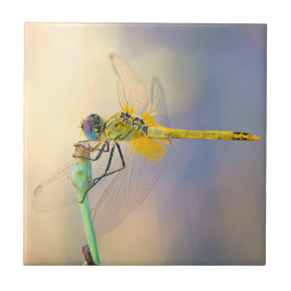 Multicolored Dragonfly Tile