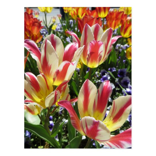 Multicolored Flowers Postcard