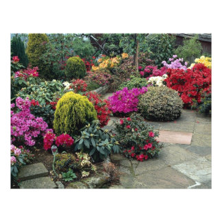 Multicolored garden with path flyer