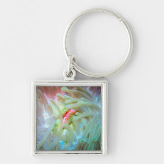 Multicolored Sea Anemone Silver-Colored Square Key Ring