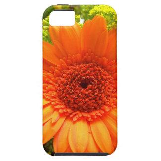Multicoloured Flower Design iPhone 5 Cases