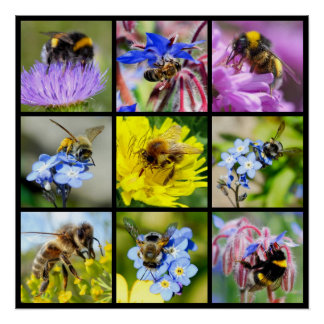 Multiple bees and bumblebees poster