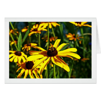 Multiple Bright Yellow Black-Eyed Susans Note Card