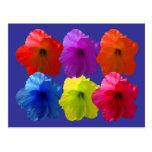 Multiple Coloured Hibiscus Flowers Postcard