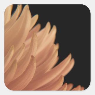 Mum Chrysanthemum Pink Flower Square Sticker