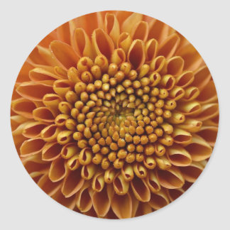 Mums Flower Big Yellow Classic Round Sticker