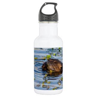 Munching Beaver collection 532 Ml Water Bottle