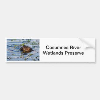 Munching Beaver collection Bumper Sticker