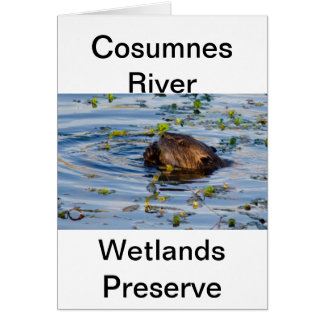 Munching Beaver collection Greeting Card