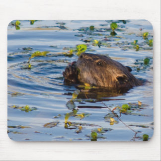 Munching Beaver collection Mouse Pad