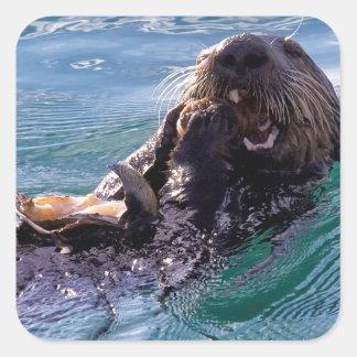 Munching Sea Otter Square Sticker