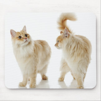 Munchkin cats mouse pad