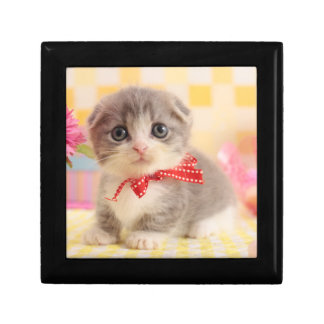 Munchkin Kitten Gift Box