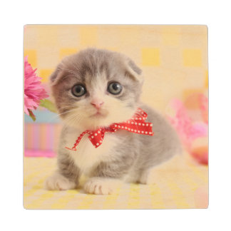 Munchkin Kitten Wood Coaster