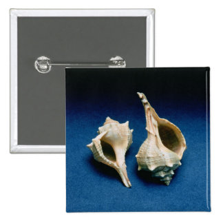 Murex shell 15 cm square badge