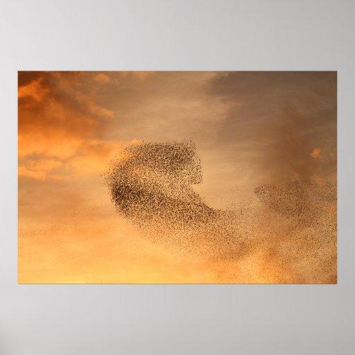 Murmuration: Murmuration Of Starlings Print