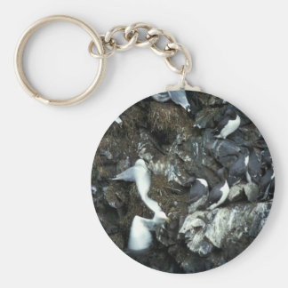 Murres and Kittiwakes Key Chain