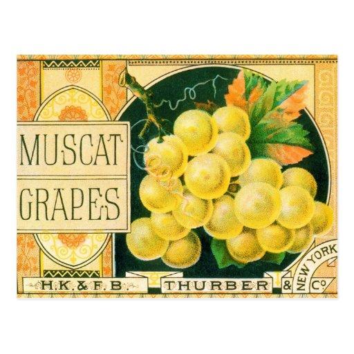 Muscat Grapes, Vintage Fruit Crate Label Art Postcard