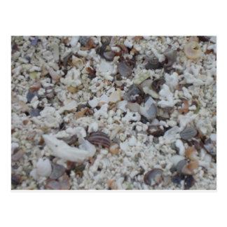 Muscheln von Strand Postcard