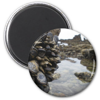 Muscles and Rocks on Newport Beach 6 Cm Round Magnet