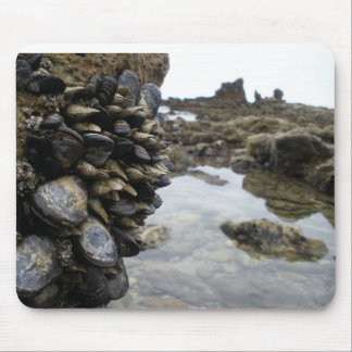 Muscles and Rocks on Newport Beach Mouse Pad
