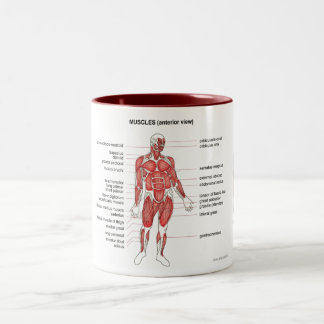 Muscles (anterior view) notes and coffee Two-Tone coffee mug