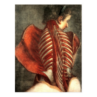 Muscles of the back in a female post card