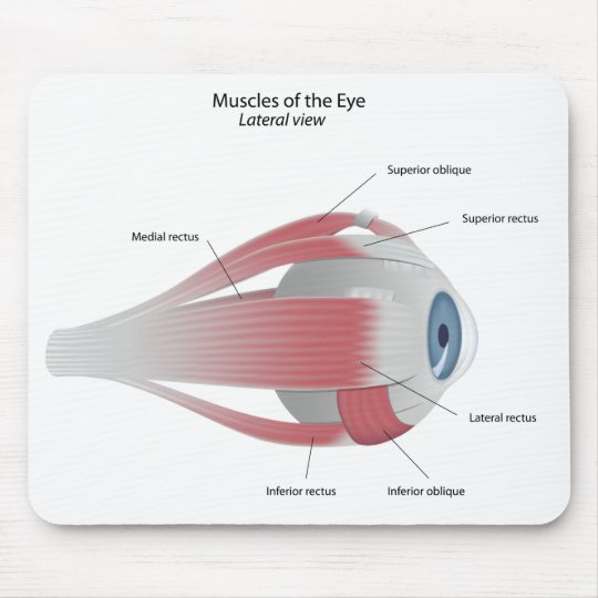 Muscles of the Eye Mousepad