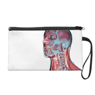 Muscles of the Head and Neck Wristlet Purses