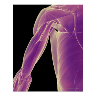 Muscles of the Shoulder 3 Posters