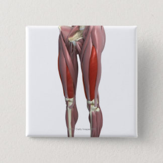 Muscles of the Thigh 15 Cm Square Badge