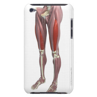 Muscles of the Thigh iPod Touch Cover