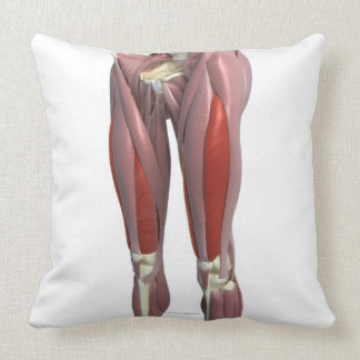 Muscles of the Thigh Throw Pillows