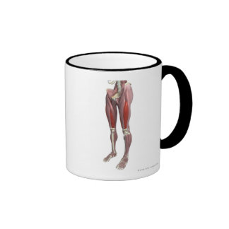 Muscles of the Thigh Mug