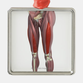 Muscles of the Thigh Silver-Colored Square Decoration