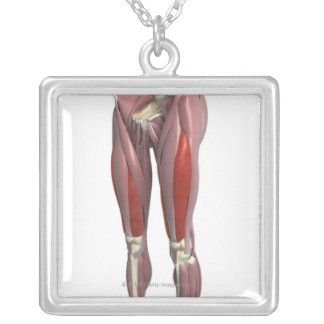 Muscles of the Thigh Silver Plated Necklace