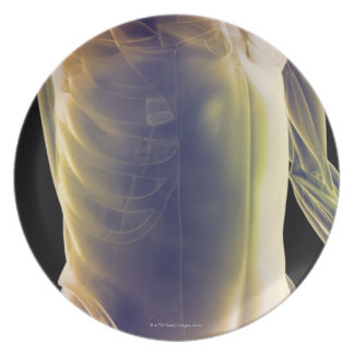 Muscles of the Trunk Plate