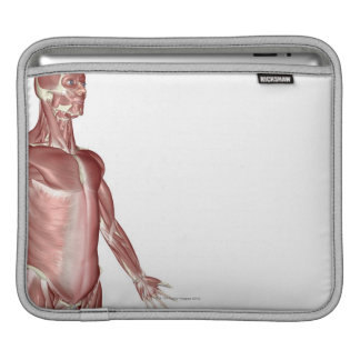 Muscles of the Upper Body 3 iPad Sleeve