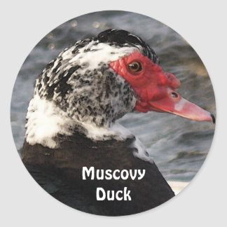 Muscovy Duck Bird Wildlife Sticker