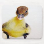 Muscovy Duckling Mouse Pads