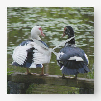 Muscovy Ducks Square Wall Clock