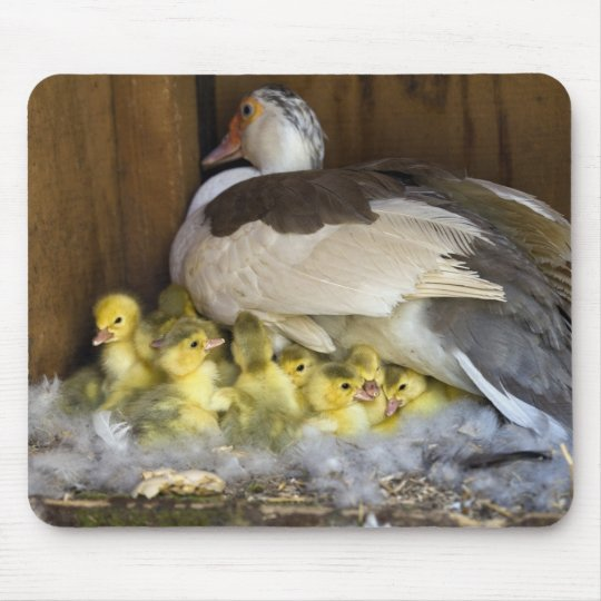 Muscovy Mouse Mat