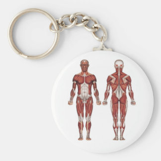 Muscular system, front and back basic round button key ring