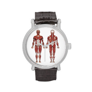 Muscular system, human anatomy wristwatch