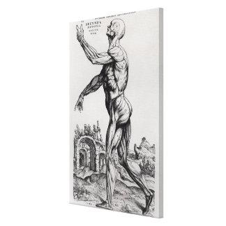 Musculature Structure of a Man (b/w neg & print) Canvas Print